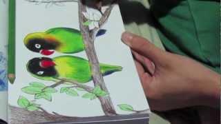 Lovebirds drawing :)