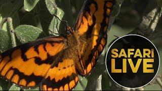 safariLIVE - Sunrise Safari - May, 20. 2018 thumbnail
