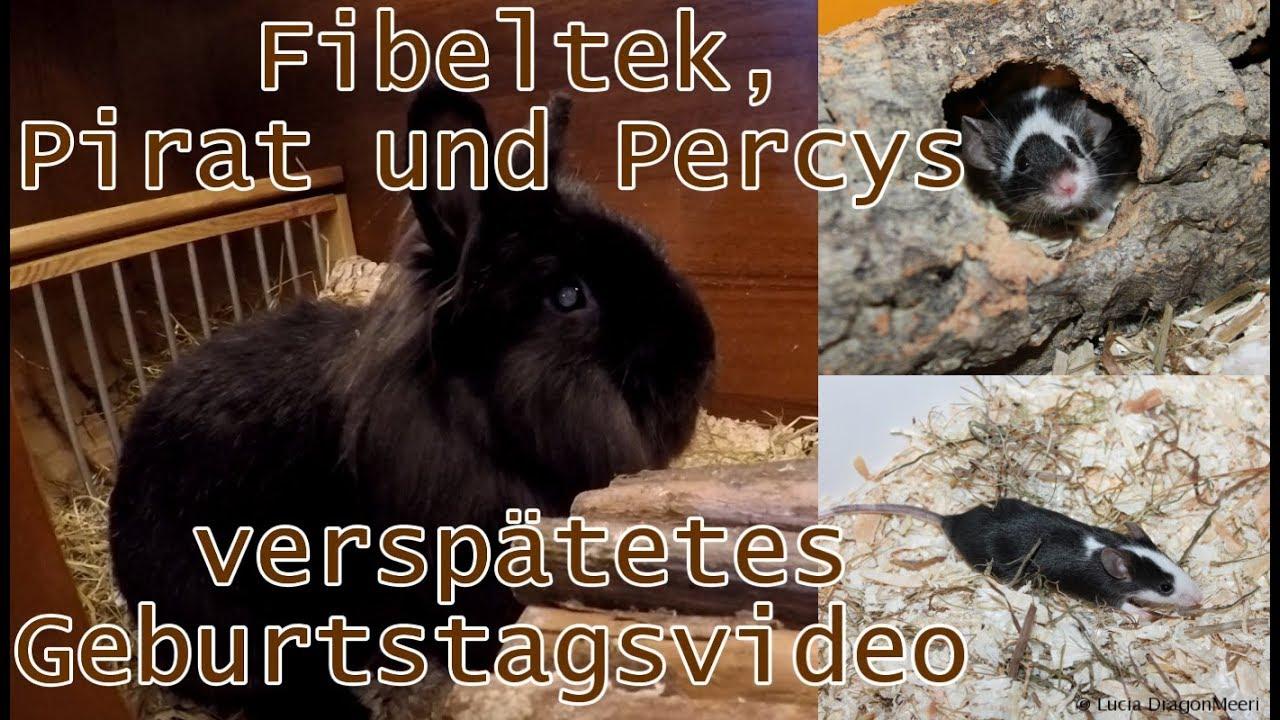 Fibeltek Pirat Und Percys Verspatetes Geburtstagsvideo Youtube