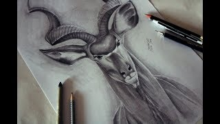 Fast Drawing | Markhor | with beautiful horns