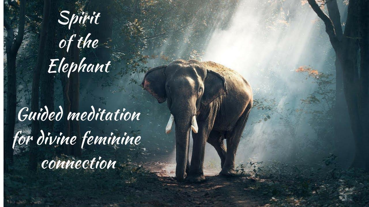 Meditation for healing feminine energy | Elephant Spirit ...