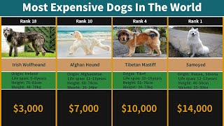 Most Expensive Dogs In The World | Most Expensive Pets In The World