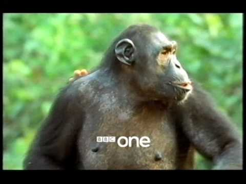 Charles Darwin and the Tree of Life - BBC One 2009