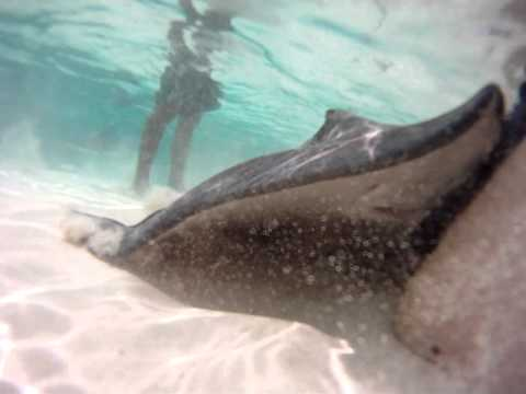 powerboat adventure  stingray feeding