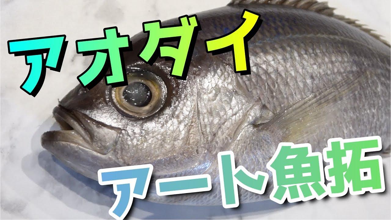 青い鯛は存在します‼美しいアオダイをアート魚拓♪