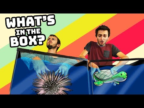 WHAT'S IN THE BOX CHALLENGE - Water Edition! (Real Life Challenges)