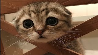 Cute Dogs and Cats Doing Funny Things 2018