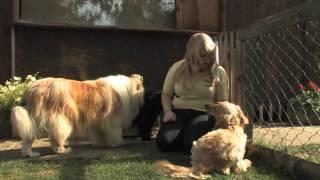 Vips - Providing Lincolnshire's Best Pet Services