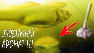 Реакция рыбы на ЧЕСНОК Подводная съемка Карась