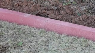 How To Install Masonry Landscape Edging : Landscaping Basics