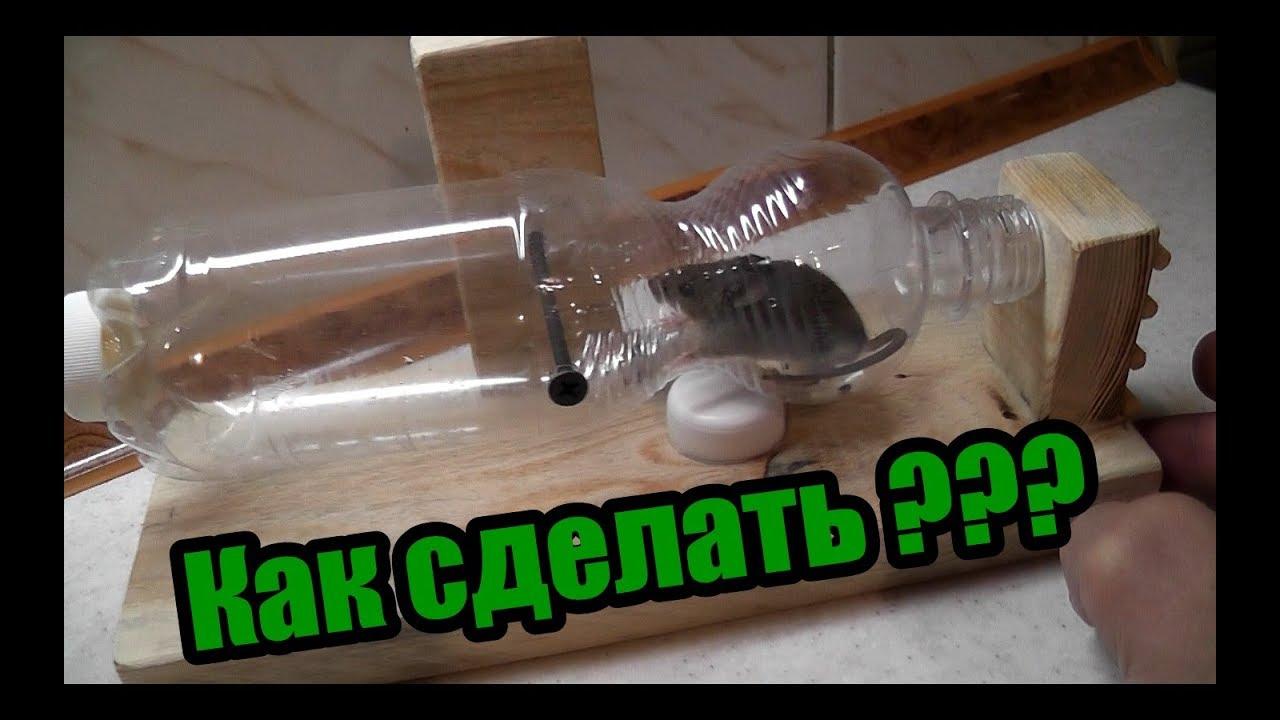 Как сделать мышеловку из бутылки фото