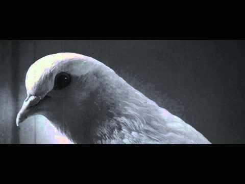 Mr Nobody 2009 pigeon superstition