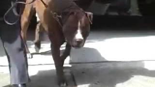 Dog Training - Boundary Training