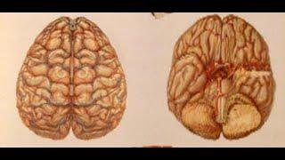 طرق لتقوية الذاكرة وسرعة الحفظ