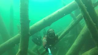 Freediving The sunken Forest