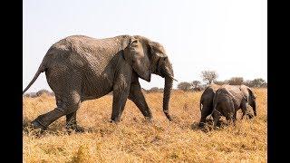 Chaminuka's Baby Elephants Meet Their New Mother, Kachele