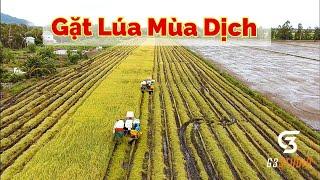 Cảnh thu hoạch lúa mùa dịch   Tri Tôn An Giang   người dân đi bắt chuột cùng đội quân miền tây máy