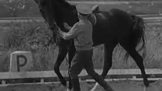 Тихонов. и выезженная лошадь.