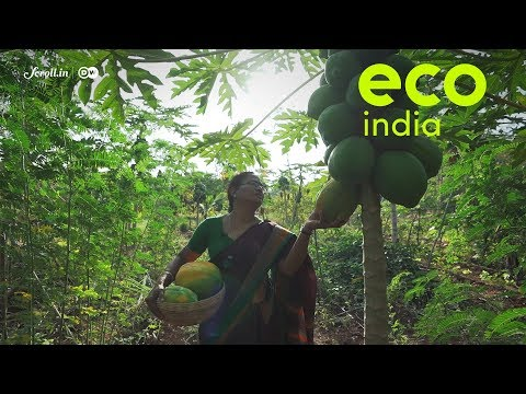 Eco India: How can farmers thrive without using chemical fertilisers?