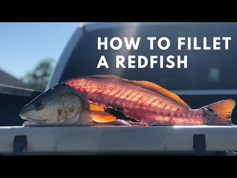 How To Fillet A Redfish (Catch And Clean!)