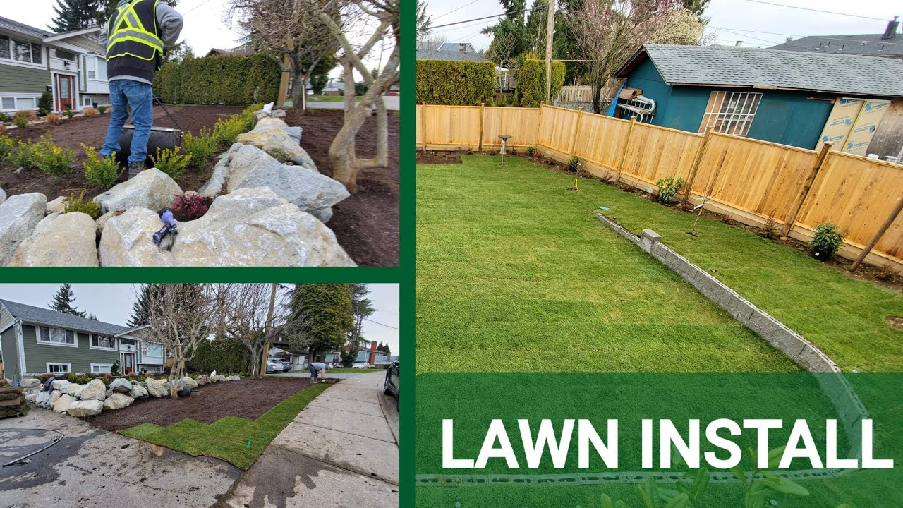 Brand New Lawn Tall Fescue Grass Installation Youtube