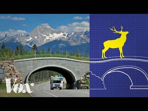Thumbnail: Wildlife crossings stop roadkill. Why aren't there more?