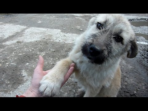 Thumbnail: Puppy Abandoned on a Busy Road Gets Rescued Just in Time
