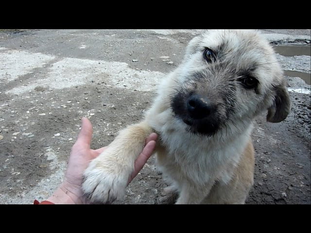 Puppy Abandoned on a Busy Road Gets Rescued Just in Time