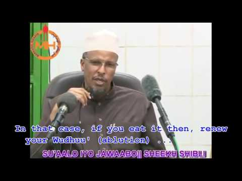 FATWA || Does Eating Camel Meat Nullify Ablution? || Sh. Shibli [ With Subtitles]