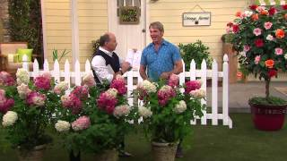 Cottage Farms Vanilla Strawberry Hydrangea with Dan Wheeler