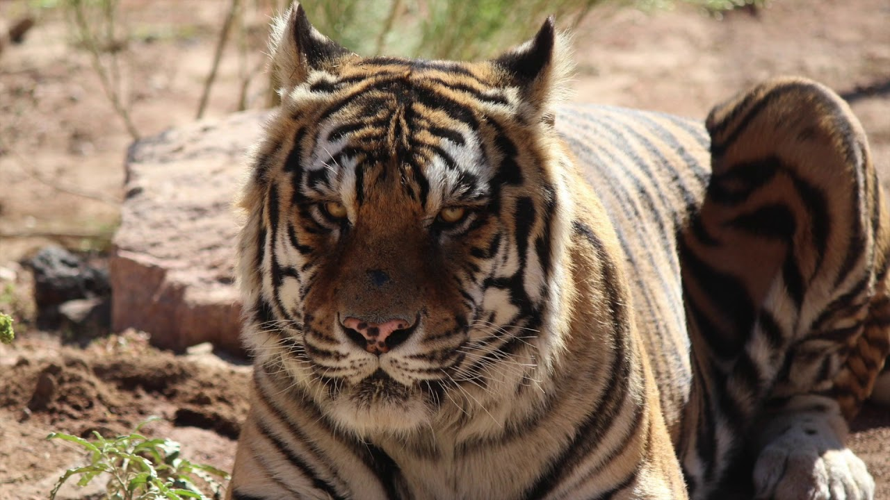 Keepers of the Wild   Exotic Animal Rescue Sanctuary