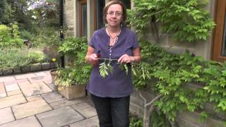 How To Make Wisteria Flower