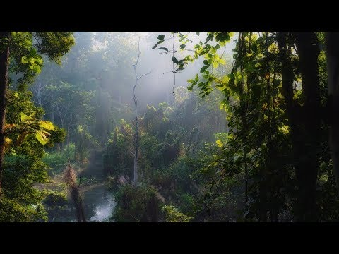 Nature Sounds Of Asia Jungle - Exotic Birds, Rain Drops - Pure Rainforest Relaxing Ambient Sounds