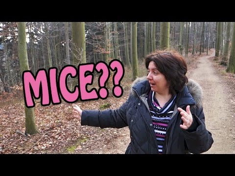 City Girl Versus the Odenwald (Germany)