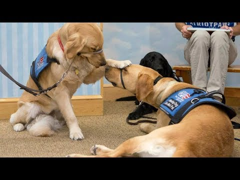 Patriot Paws | Training Service Dogs for Veterans