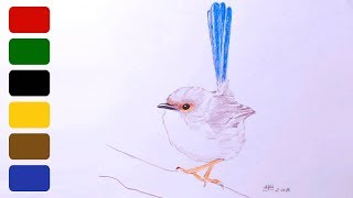 How to Draw a Bird - Fairy Wren