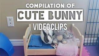 CUTE BUNNY VIDEOS (COMPILATION)