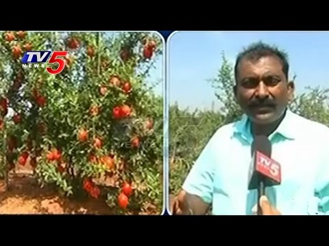 Special Story On Ideal Farmer | 80 Lakhs Earned By Using Organic Fertilizers | Nalgonda |  TV5 News