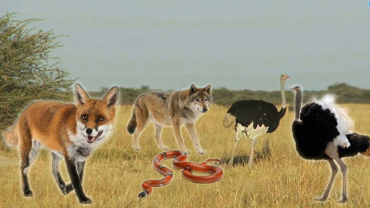 Bài 8: Động vật hoang dã và các hành động - Dạy bé các con vật || Bé học nói qua con vật