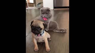 Cute Puppies - NEW PUPPY VIDEO COMPILATION #3