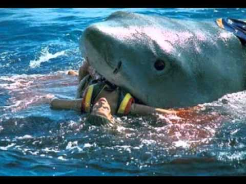 SHARK ATTACK CAUGHT ON TAPE! (GRAPHIC CONTENT) - YouTube