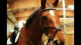 Solero Cardenia Reitvideo Dressur / Springen
