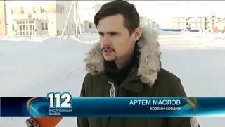 В Нижнем Новгороде владельцы породистой собаки через суд пытаются лишить прав водителя, сбившего их