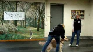 The Makings Of A Great Obedience Dog