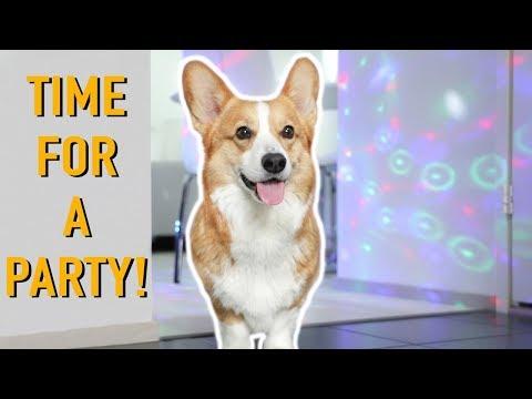 HOUSE PARTY! - Topi the Corgi