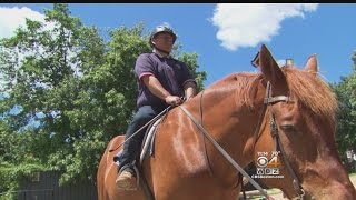 Andover Farm Helps Veterans Find Peace