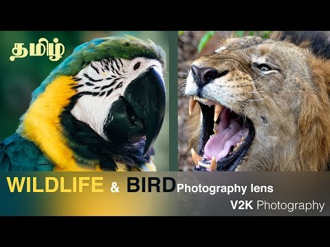 Bird Photography Lens | Sigma 150-500 review | Photography in Tamil