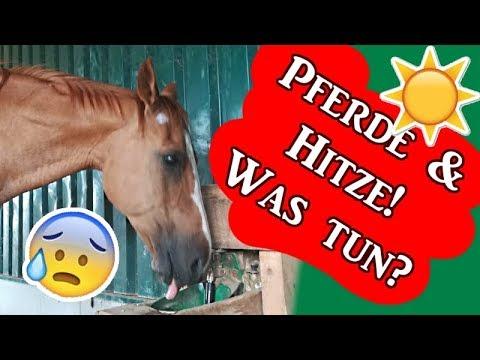 pferde und hitze was kann ich tun gegen berhitzung ausreitvlog serenity horses youtube. Black Bedroom Furniture Sets. Home Design Ideas