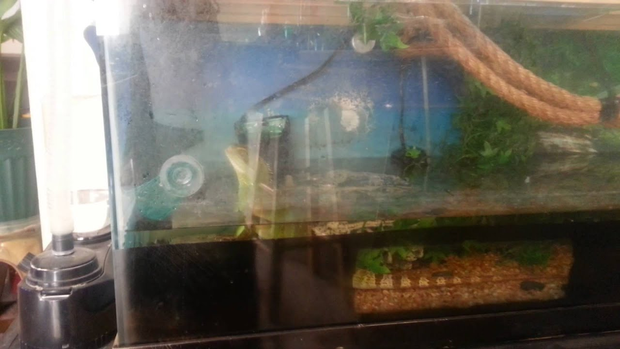 Images Of Chinese Water Dragon Cage Gepezz