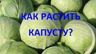Как сажать капусту? Видео Екатерины Хлебниковой(сад, огород, как вырастить рассаду капусты? Как подготовить почву для рассады? какие сорта капусты выбрать?, 2015-02-25T21:39:35.000Z)